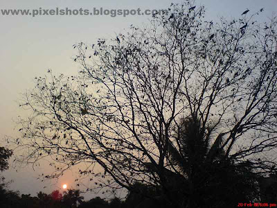 tree with spread out branches and a few leafs photographed with sunset in the background horizon,a picture from calicut district kerala