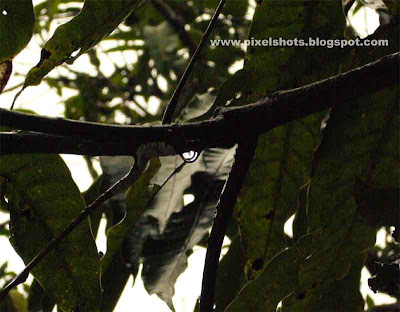 rain water droplet clinging to mango tree branch photographed using panasonic lumix digital cameras