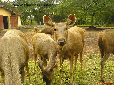 deers closeup photograph from hill palace deer park in cochin kerala