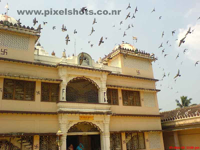 pigeons flying around the cochin jain temple in kerala india,birds-in-temples