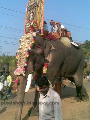 Kerala's Temple Elephants Names and Photos- Domestic Asian ...