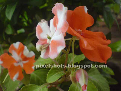 flowers of kerala,onam flowers kerala,flower bunch from home gardens in kerala india,flower in onam season