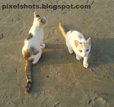 cats closeups from beaches in kerala calicut,kittens in the beach