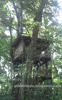 tree houses,tree house in thenmala deer park,kerala eco tourism spots,kerala tree houses