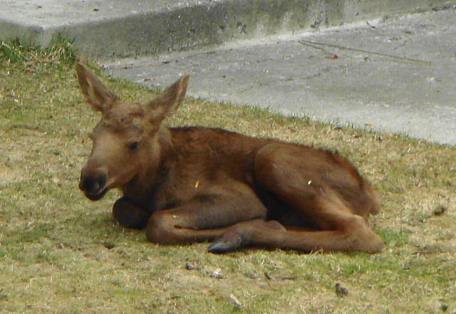 Are Newborn Babies Quiet The One Acre Wood Moose Baby