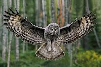 Pöllön Jalat