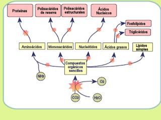 Maniquíes aproximadamente metabolismo cerebral