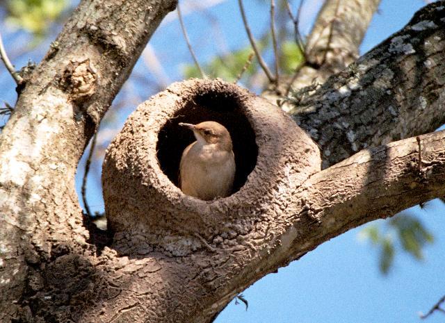 Resultado de imagen de nido pájaro