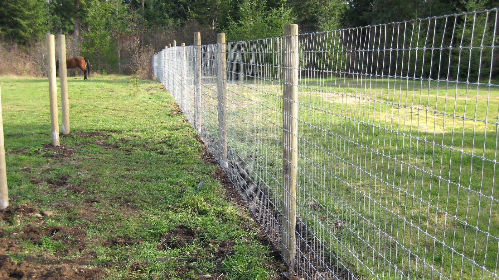 Two Horse Ranch New Fencing In Action