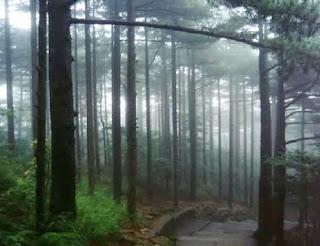 Hutan Hutan Unik Di Bawah Air Contoh Artikel