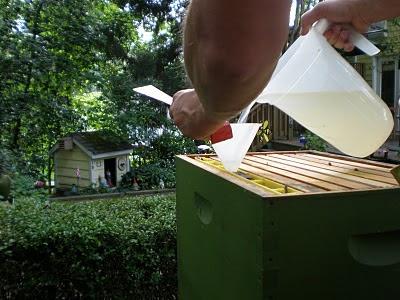 bee, bee package, beekeeping, division board feeder, drowned bees, feeder, Honey B Healthy,