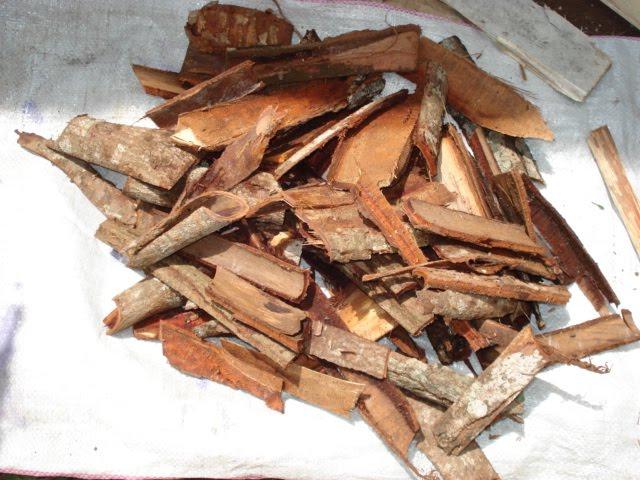 Kulit akar mengkudu yang telah dipotong-potong untuk dijadikan pewarna batik