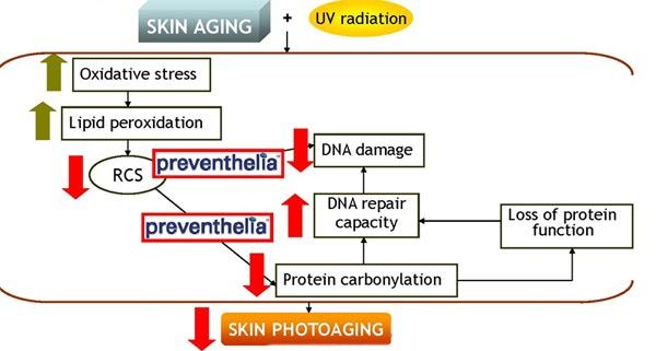 hormonal acne diagram romeo and juliet plot krista skin pro: january 2011