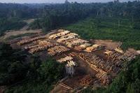 Penebangan liar di Papua