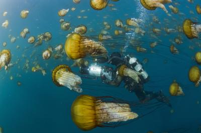 Océans : voyage fascinant dans les grandes profondeurs (Film documentaire) 1