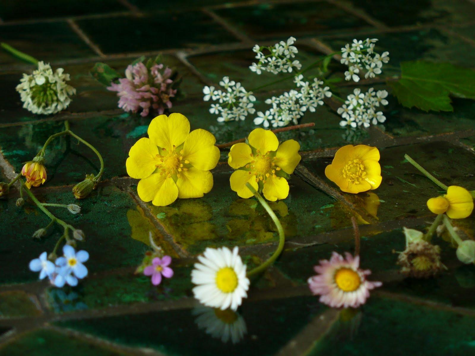 A la douce: Petites fleurs sauvages