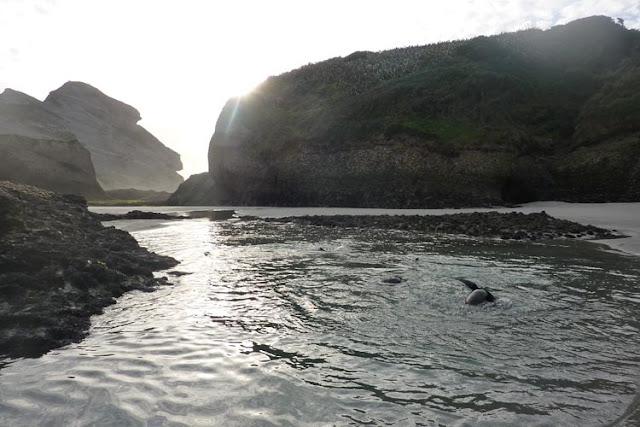 Una vez con las focas, seremos capaces de estar horas mirándolas
