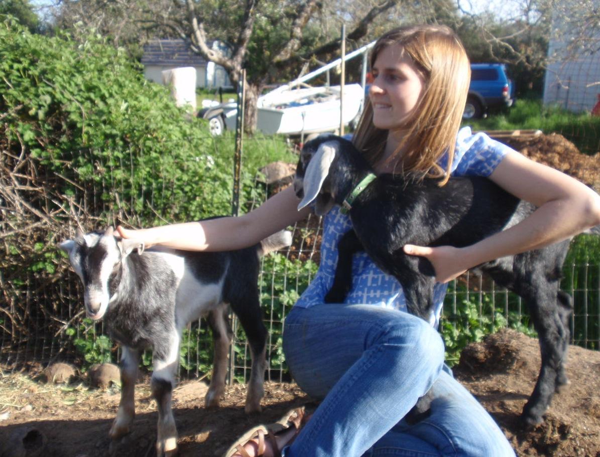 Solar Living: Urban Homesteading: How to Raise Backyard Goats