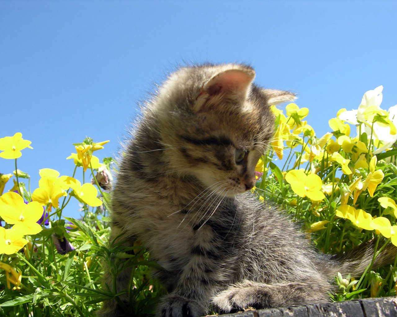 Cute Fairy Wallpaper 3d Strictly Wallpaper Wallpapers For Cat Lovers 4