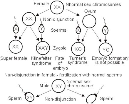 what are sex chromosome disorders in Lismore