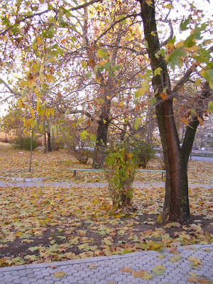 Autumn Picture in Yambol Town Park