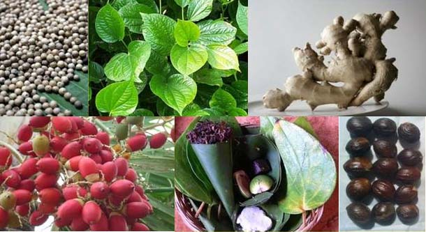 Peluang Bisnis Obat Kuat Herbal