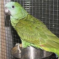 Tudo por causa de um papagaio 2
