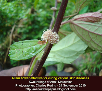 Rainforest flower as medicinal herbs