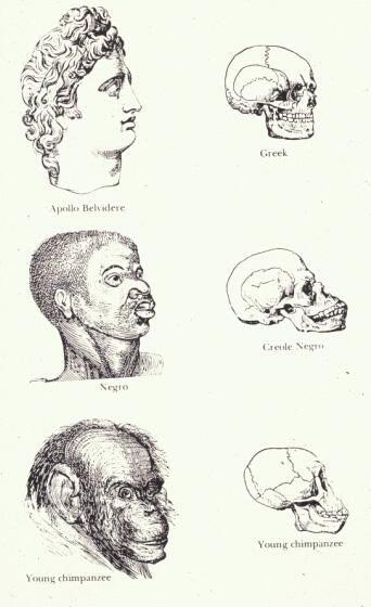 Theonomy Resources: Darwin's Legacy of Evolutionary Racism
