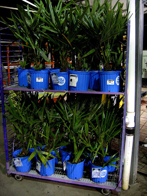 1003 Gardens Go Figure Cold Hardy Palms From A Box Store