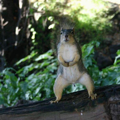 Funny squirrels | Curious, Funny Photos / Pictures
