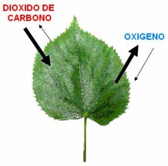 Ciencias Biologicas Respiracion Celular