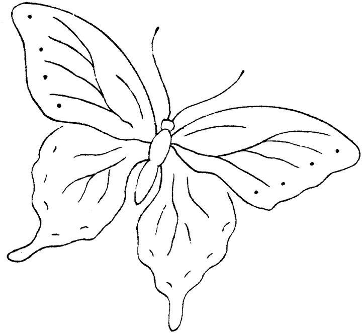 Imagenes De Una Mariposa Para Colorear