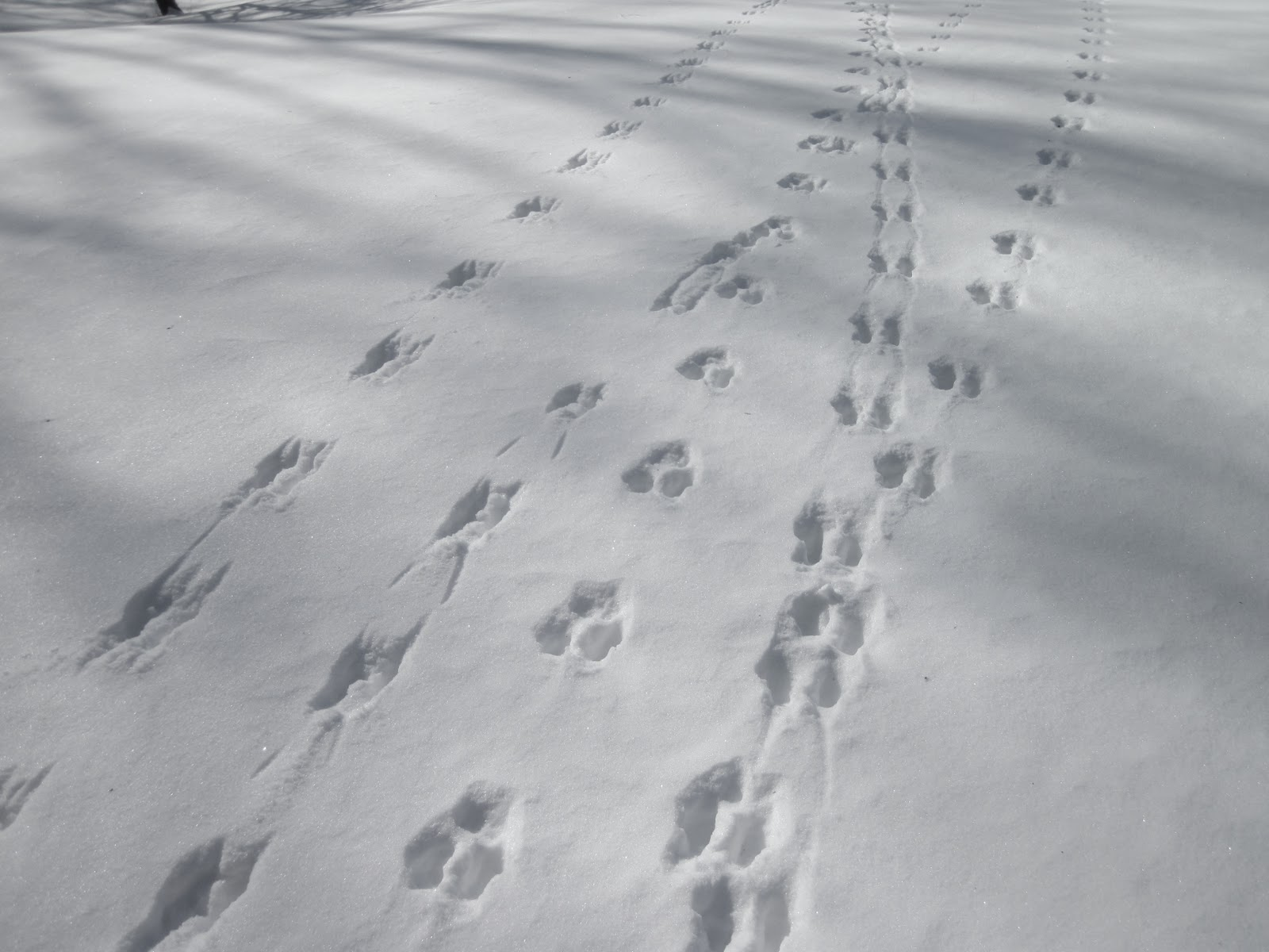 Animal Tracks In Sand Snow Nature On The Edge Of New York City