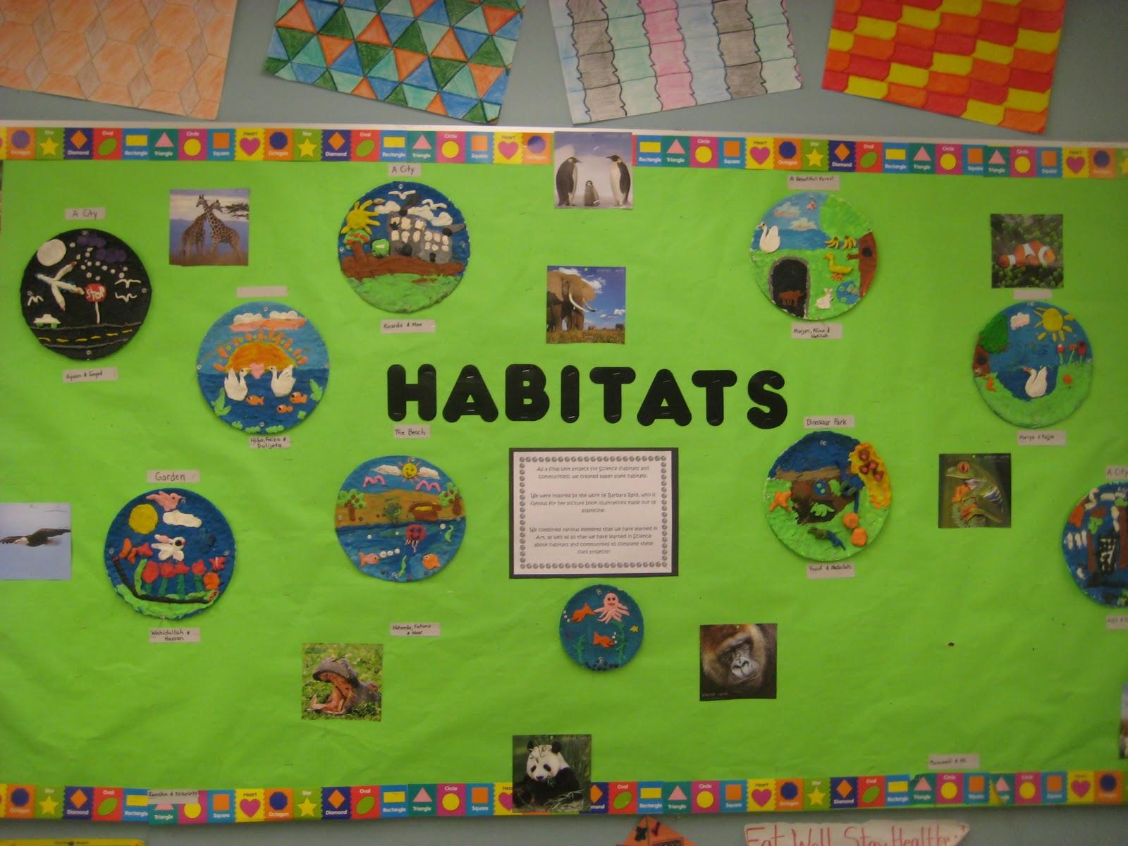 Msrji S Grade 4 Class Habitat Projects Are Complete