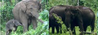 Way kambas dengan Hutan India