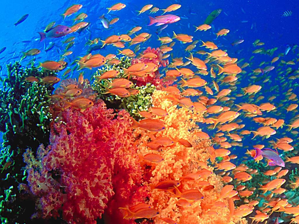 Wallpaper Pemandangan Bawah Laut 1000 Fakta Unik Dan Menarik