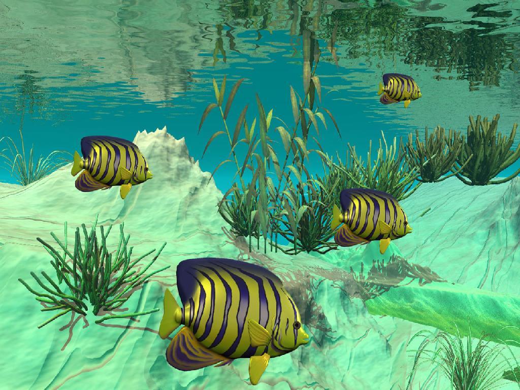 Wallpaper pemandangan bawah laut | Berita Pos Online
