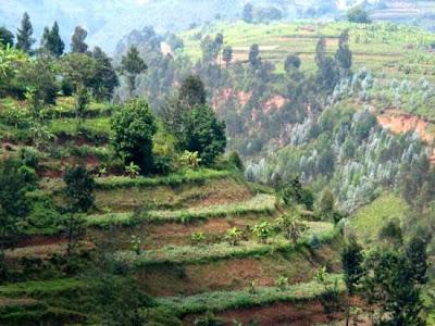Milenioscopio Terrazas De Cultivo Del Imperio Inca