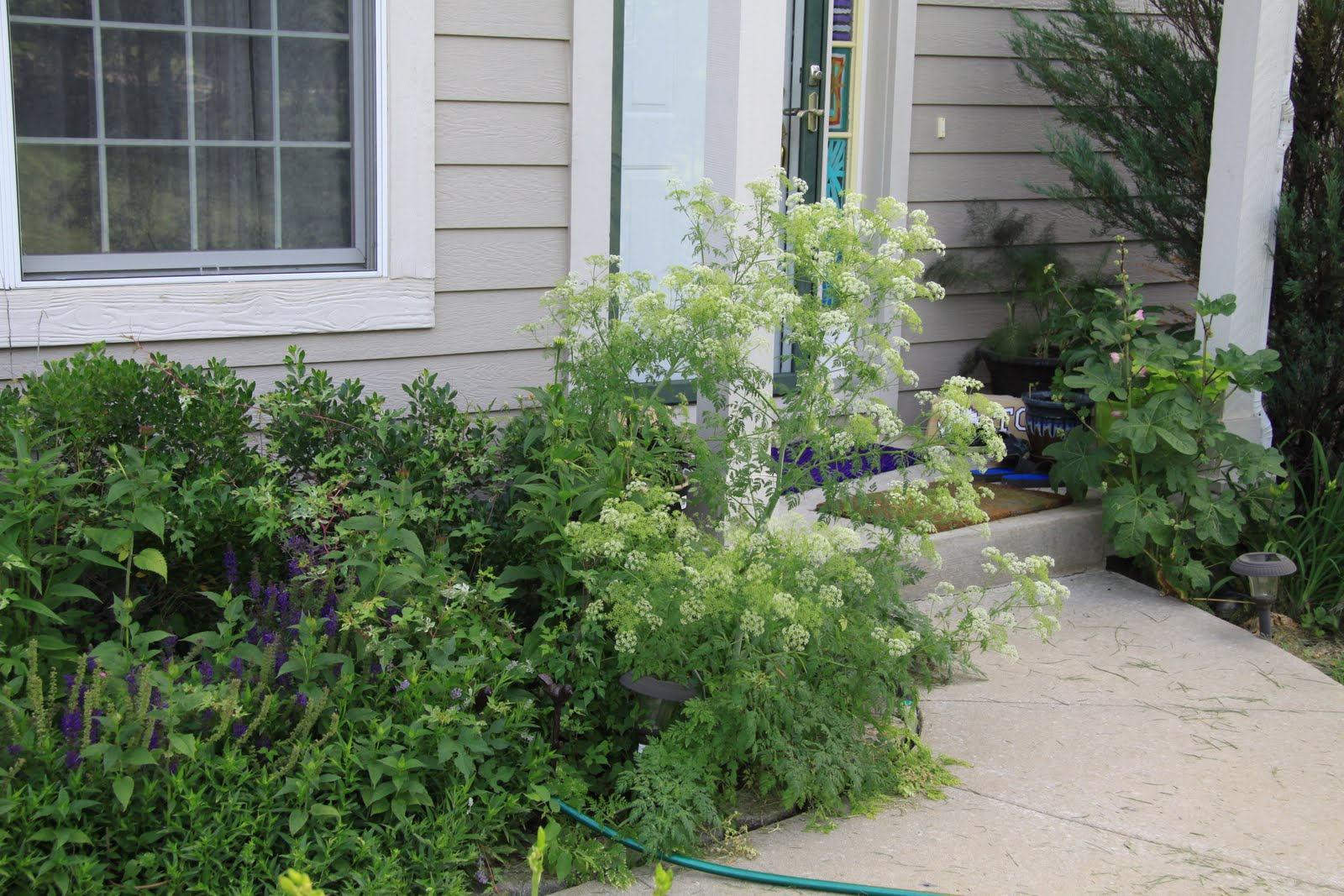 Yakni Achukma (The Good Land): Front porch plants and ...