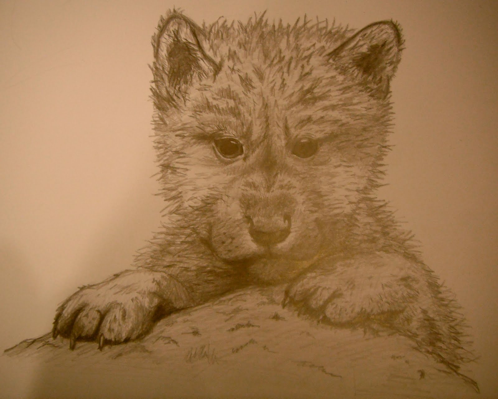 Sam Eggletons Art Work In Process Wolf Drawing