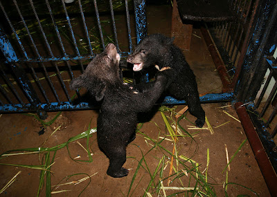 Bear Rescue Center Laos