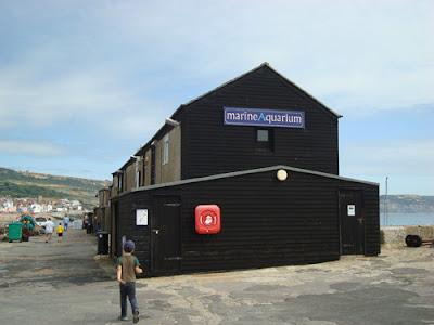 Lyme Regis Aquarium