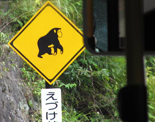 Japanese macaque in Hakone sign