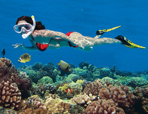Awesome Adventures Concierge Services: KEY WEST SNORKELING