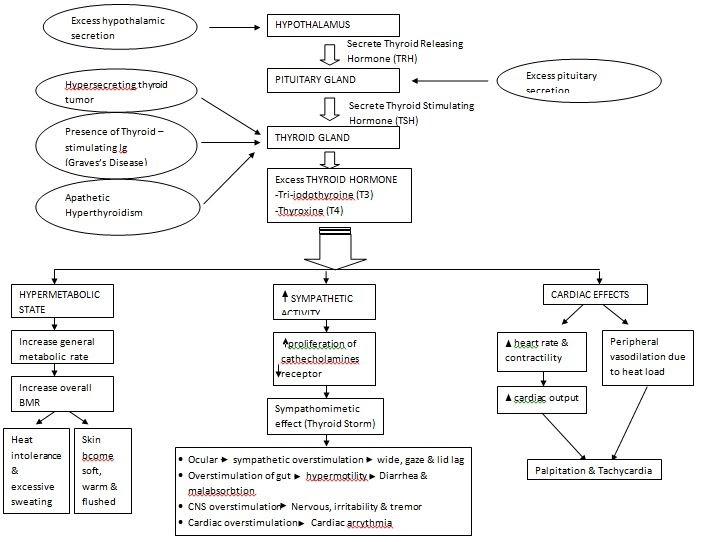 Hyperthyroidism: Pathophysiology
