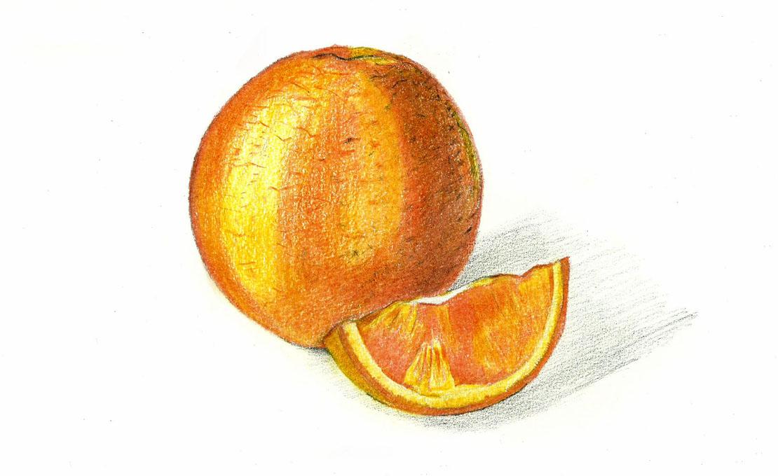 Orange Fruit Pencil Drawing