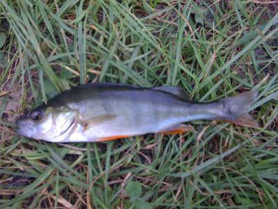 naturschutzgebiete für fische