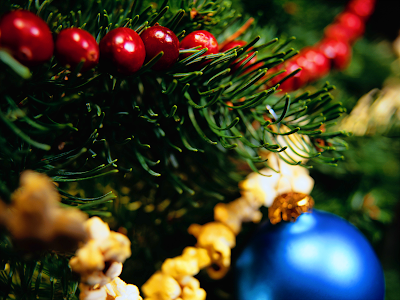 Christmas tree, holiday, yule tree