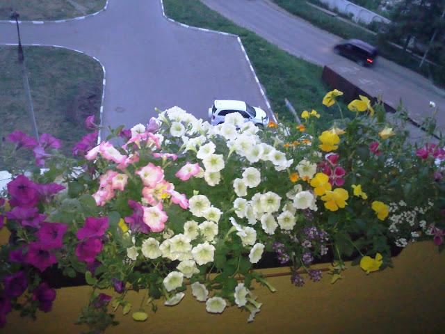 Kirche: Цветы на балконе